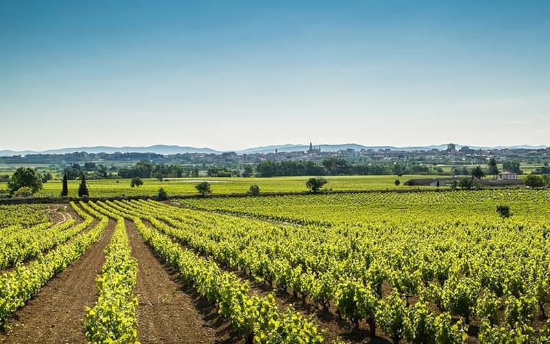 CORPINNAT: la nueva marca de vinos espumosos del Penedés