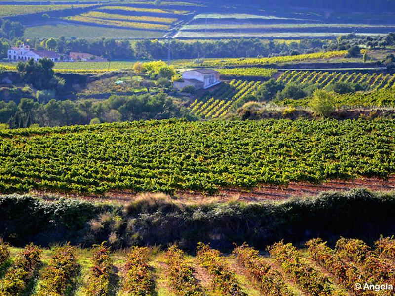 Experiencia Penedès, 2.700 años de historia vinícola en la DO Penedès por José María Toro (Blog Hedonista)