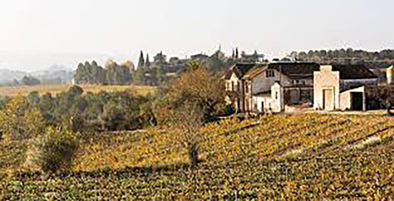 VINS EL CEP: apuesta por los vinos orgánicos y biodinámicos